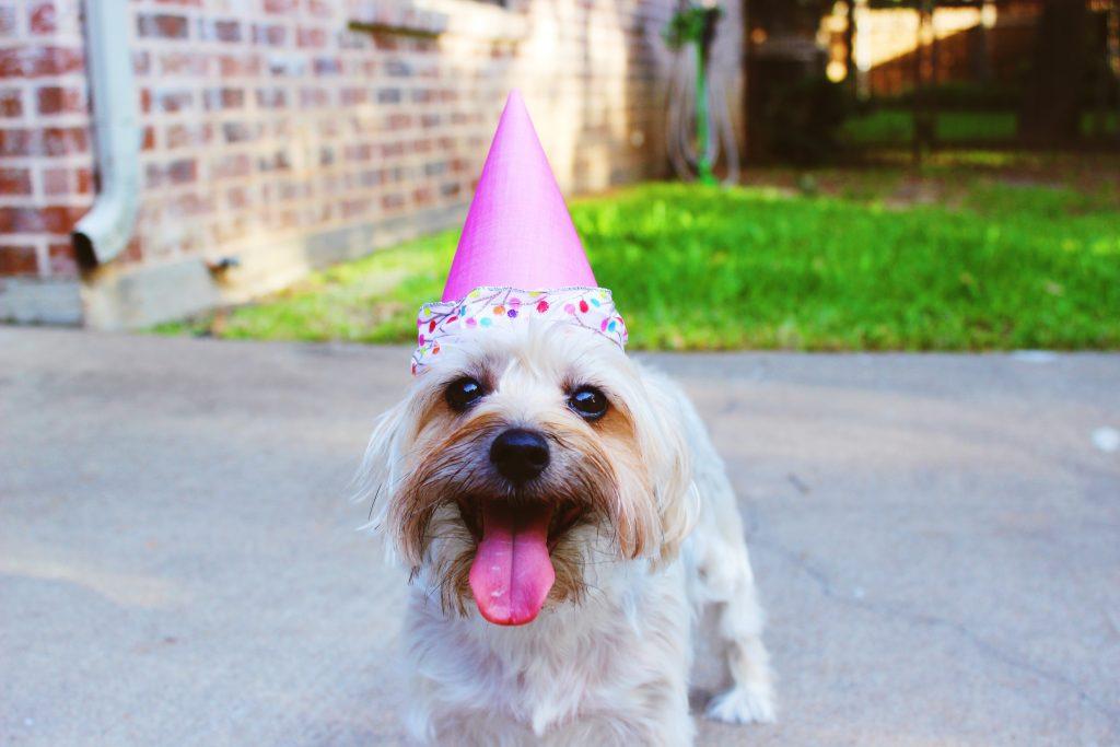 Chien-chapeau-d'anniversaire