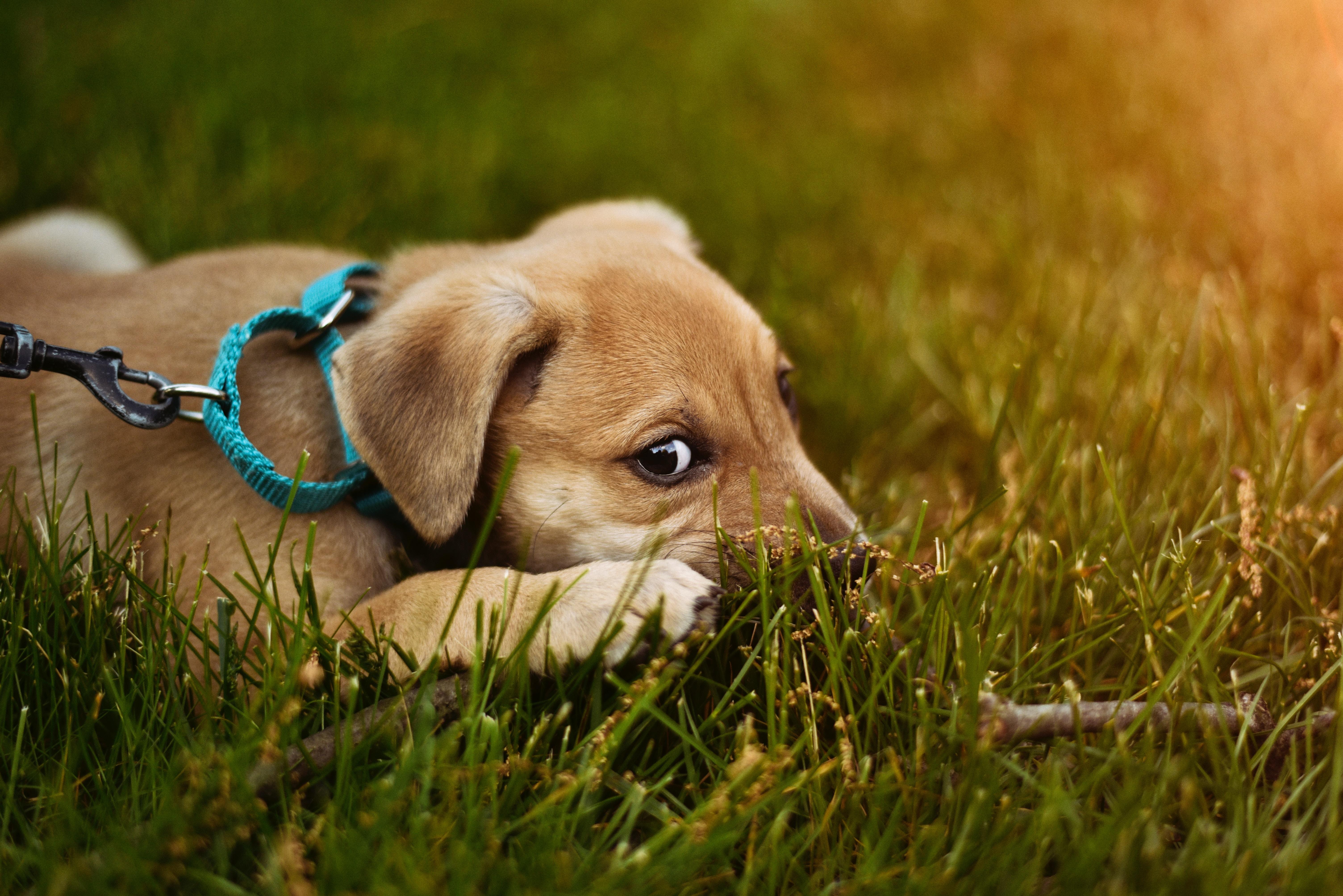 Chien-dans-l'herbe