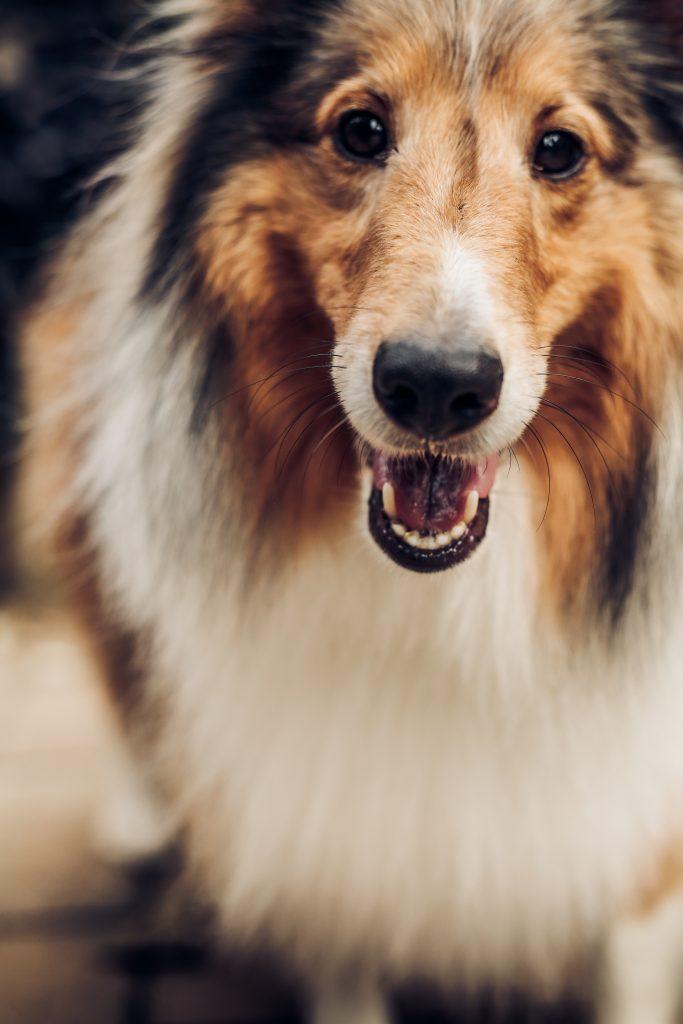 Beau-chen-qui-sourit
